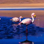 Flamingos, Laguna Colorada, Uyuni