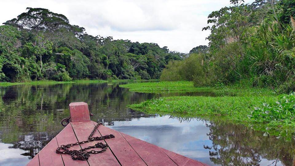 Bolivian Amazon pink river dolphin tour
