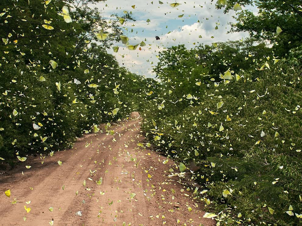 butterflies Valle de Tuvacava
