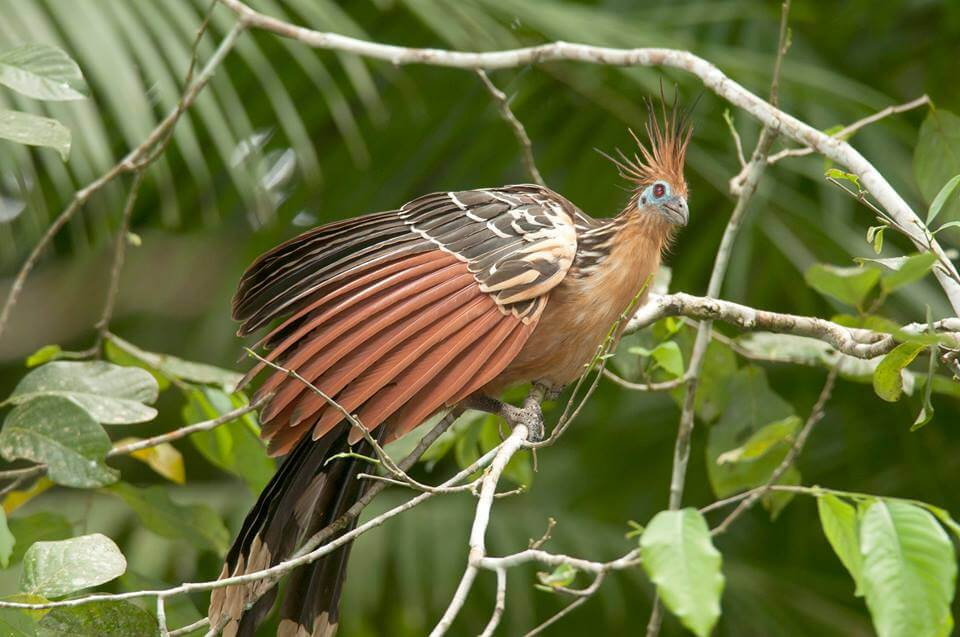 bird in Madidi NP