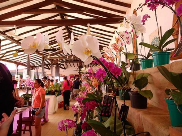 Orchid exhibit - Orchid Festival Concepcion, Bolivia