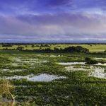 Pantanal Bolivia - Pantanal tour