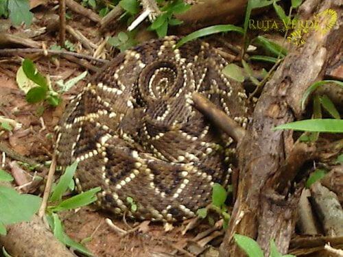 Snake - Los Fierros Noel Kempff national park