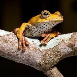 Biodiversity Bolivia