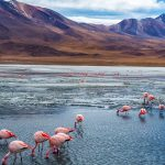 Flamingos during the Uyuni salt flats tour