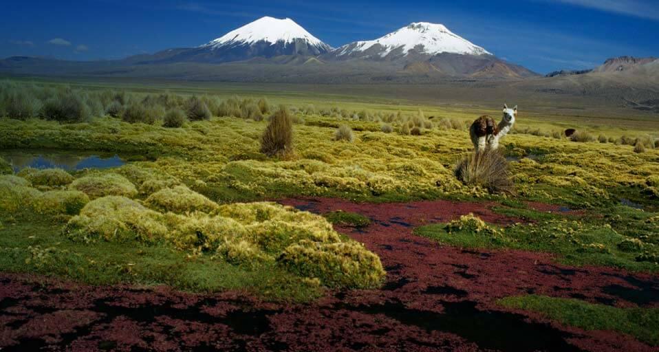 sajama-national-park